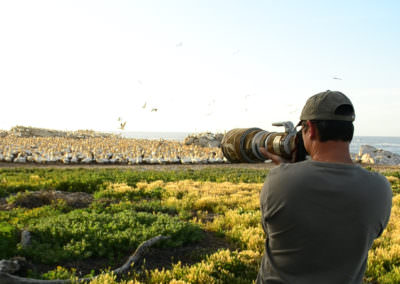 Photographing Gannets.