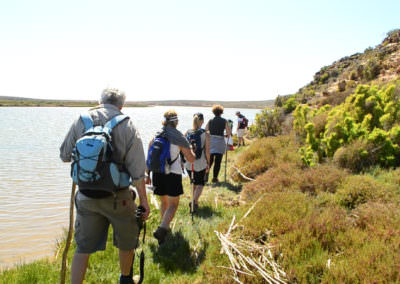 Navigating the banks of the Olifants River.