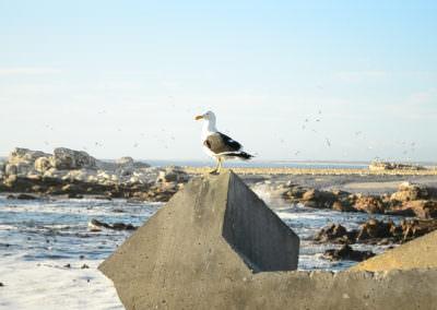 Seagull at Bird Island.