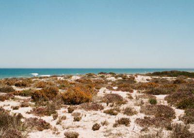 Beauty of the coast